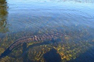 eels - glacier lake tours