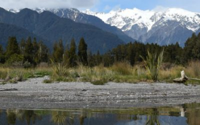 Spring is here! – Franz Josef Tours