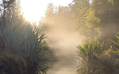 The 'Roar' in the Okarito Sanctuary – Galcier Country Kayaks news