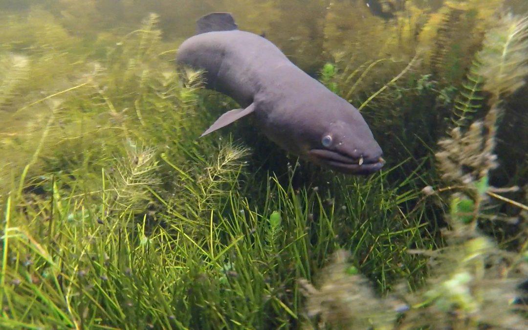 Franz Josef Tours – Eels Beneath the Surface