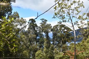 a view from the forest of Lake Mapourika