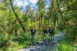 Mountain bikes in rainforest
