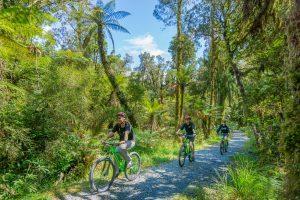 rainforest and mountain bikes