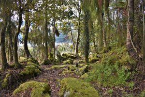 rainforest trail on lake mapourika