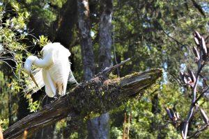 white heron in trees